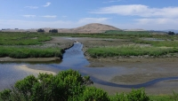 Lower Tolay/Tubbs Marsh Enhancement