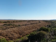 Sonoma Creek Baylands West